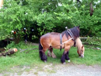 chevaux_aprs_effort