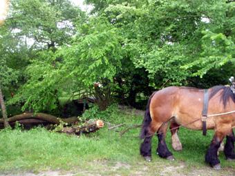 chevaux_et_moufle